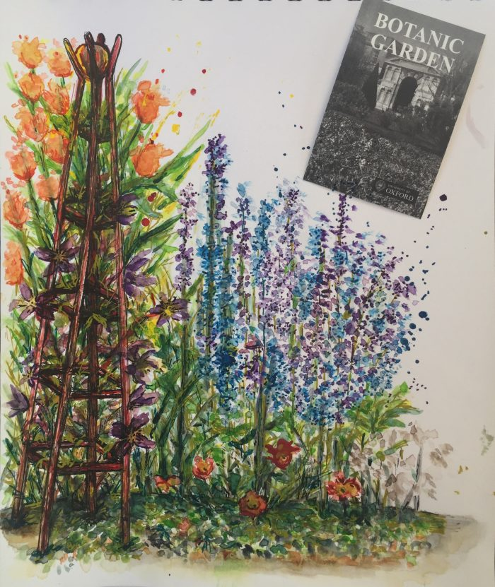 Watercolour and ink of flowers in Oxford Botanic Gardens England